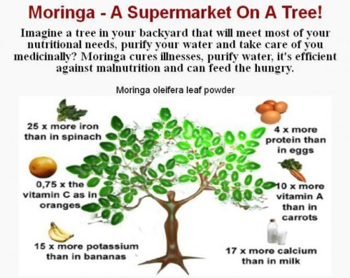 Moringa Induces Cancer Cell Death