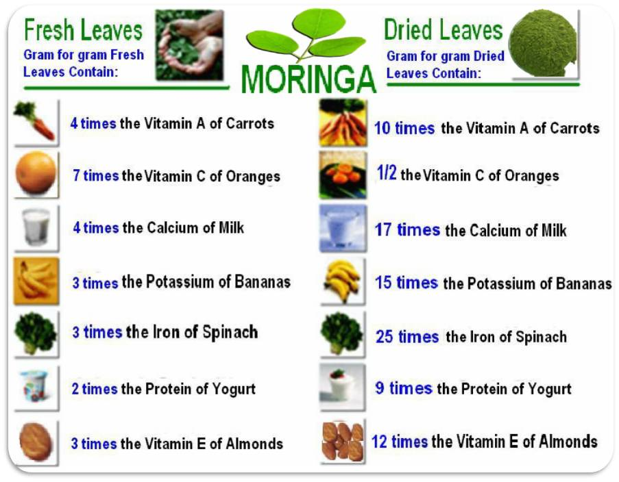 Moringa value