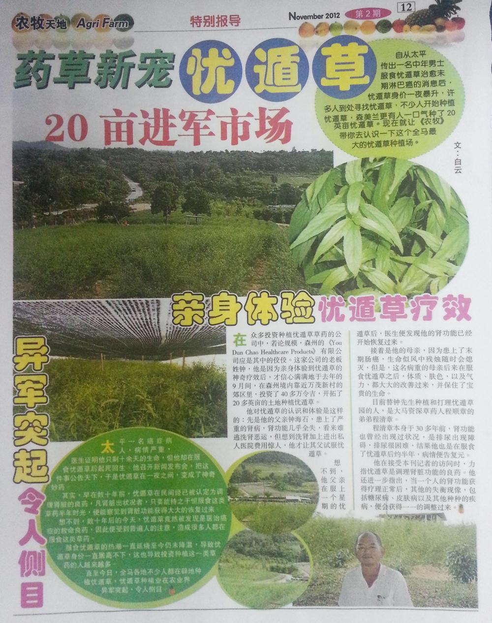 agri farm sabah snake grass belalai gajah plantation farm1