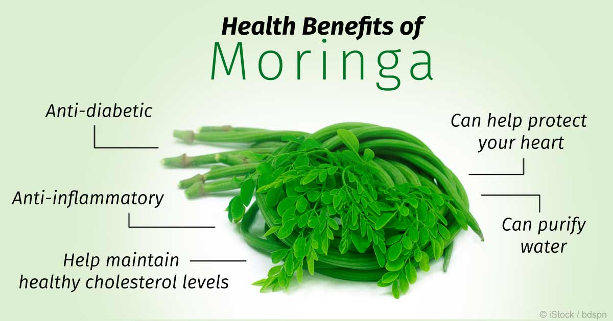 Moringa Tree: Side Effects & Uses for Cancer Treatment