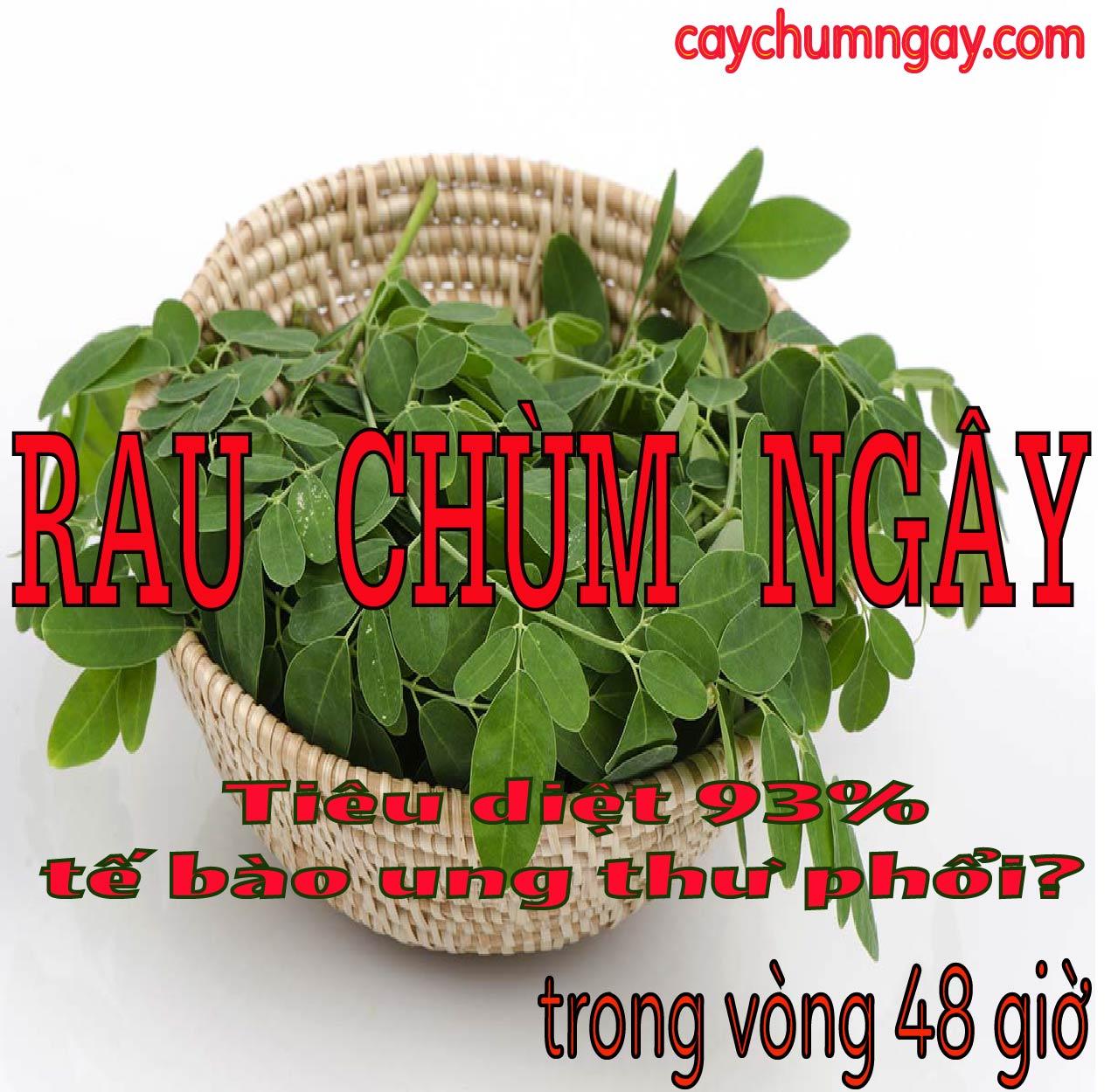 Rau Chùm ngây